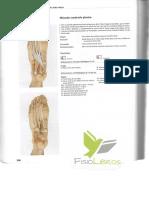 El libro de los musculos 2.pdf