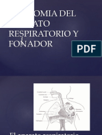 Anatomia Del Aparato Respitario y Fonador