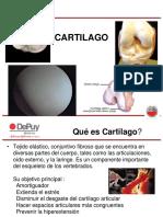 presentacion cartilago