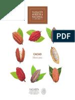 B Sico Cacao