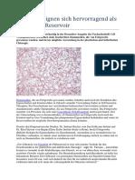Fettzellen Eignen Sich Hervorragend Als Stammzell