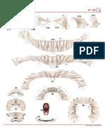 león blanco canon.pdf
