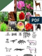 Biodiversity Name the Pic Activity