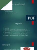 Válvula Angular