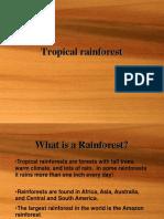 TropicalRainforestMB.pptx