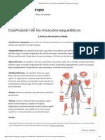 Clasificación de Los Músculos Esqueléticos _ Anatomia en Grupo