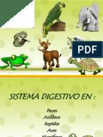 Digest Ivo