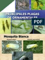 PLAGAS EXPOSICON DIPLOMADO2