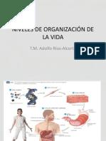 00b NIVELES DE ORGANIZACIÓN CLASE OFICIAL 2018
