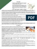 gallinas y caballos texto para cuadro comparativo 5°