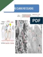 CELULAS CLARAS.pptx