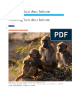 Interesting Facts About Baboons