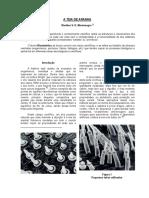 FC66_02.pdf
