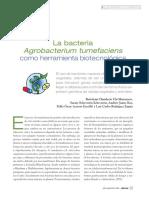 La Bacteria Agrobacterium