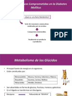 94063649 Rutas Metabolicas en Diabetes