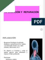 01-inflamacion(1)