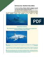 Caracteristicas Del Tiburon Para Niños