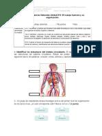 Evaluación Ciencias Naturales 5 año 2018 Unidad N °2 el cuerpo humano y su organización.doc