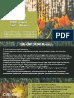 Tugas Botani Rosales - Rosaceae.pdf