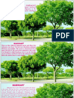 Infos About Trees