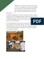 El Puma o León Americano