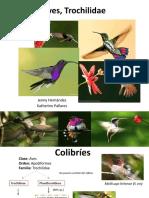 Aves- colibris -Trochilidae.pptx