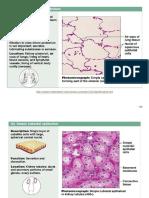 Epithelium Tissue Charts