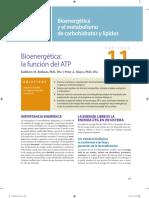 Bender_Murray_Bioquimica_Ilustrada_29a_capitulo_muestra.pdf
