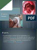 La placenta y membranas fetales