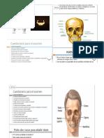Folleto de Anatomia UTECO