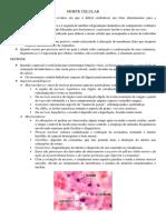 T02 - Morte Celular (Resumo 1)