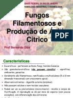 Fungos e Acido Citrico