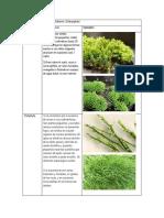 Divisiones del reino vegetal Subreino embryophyta.docx