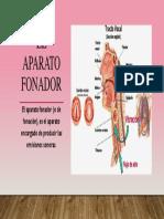 El Aparato Fonador.pptx