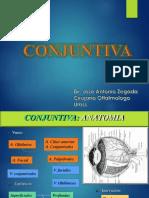 5. Conjuntiva