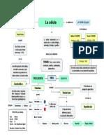 Mapa Conceptual - 8 - La Célula