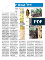 87. The Jurassic Forest 19 Aug 18b.pdf