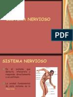 Sistema nerviosoOK