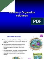 Células y organelos celulares
