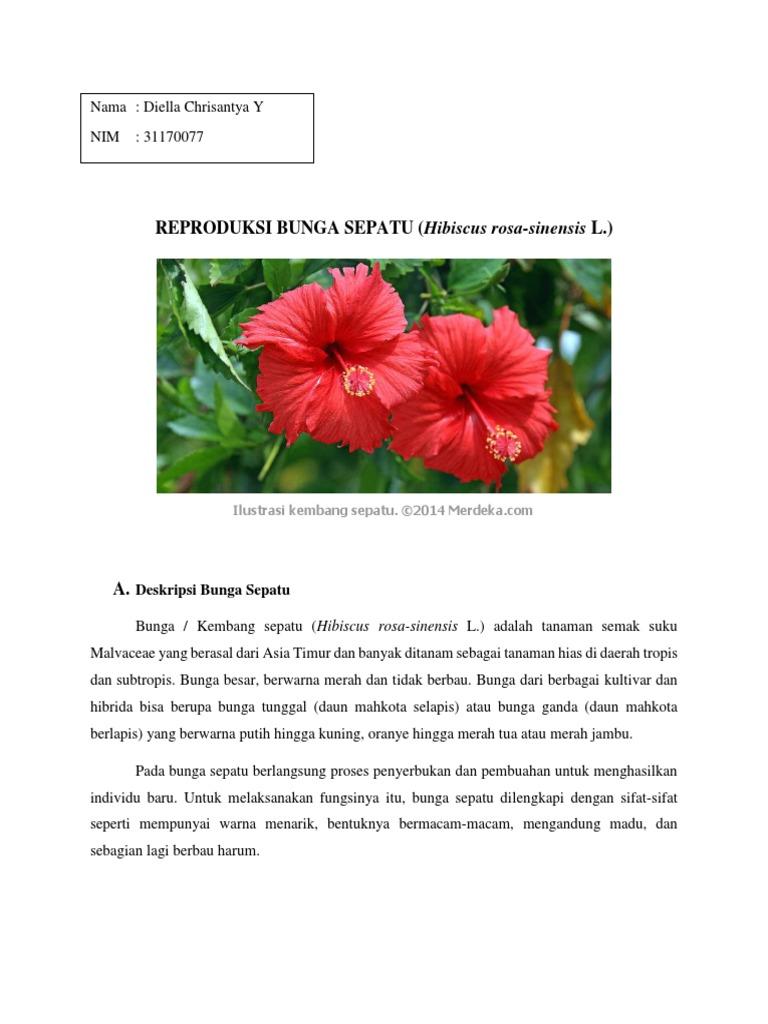 Bagian Bagian Bunga Kembang Sepatu Dan Cara Penyerbukannya