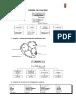 Ficha Sistema Circulatorio