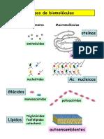 biomoleculas.pdf