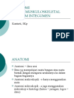 ANATOMIMUSKULOSKELETAL