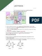 Los Nucleótidos