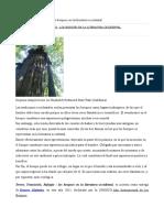 Terror y Bosques