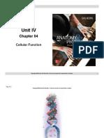 A&P I - Unit IV - Powerpoint