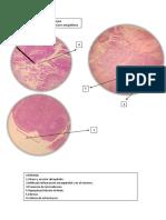 Patologia Practica 08