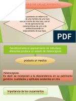 cruzamiento.pptx