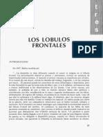 LOS LÓBULOS-Extracto de Texto