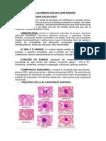 5- Células Hematológicas e Suas Funções